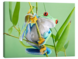 Linda Wright - Red-eyed tree frog