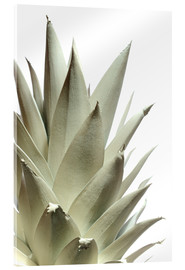Acrylic print  White pineapple - Neal Grundy