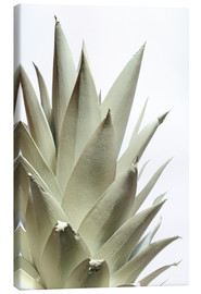 Canvas print  White pineapple - Neal Grundy