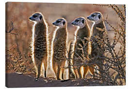 Canvas print  Meerkats on guard duty - Tony Camacho