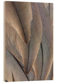 Wood print  Crane Feathers - Paul D. Stewart