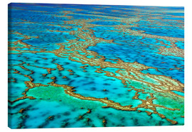 Canvas print  Great Barrier Reef, Australia - I. Schulz