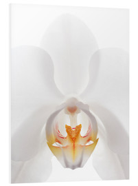 Foam board print  in the throat of the Orchid - GAVIN KINGCOME