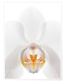 Premium poster in the throat of the Orchid