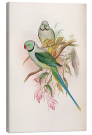 Canvas  Blue winged Parrakeet - John Gould