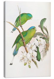 Canvas print  Philippine Racket tailed Parrot - John Gould