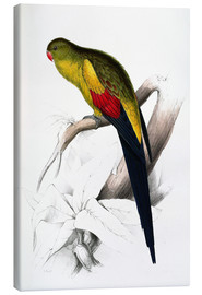 Canvas print  Black tailed Parakeet - Edward Lear