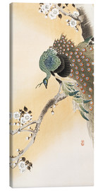 Canvas  A peacock in a cherry tree crown - Ohara Koson