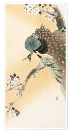 Premium poster  A peacock in a cherry tree crown - Ohara Koson