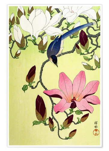 Premium poster Magpie with Pink and White Magnolia Blossoms