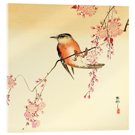 Acrylic print  Red bird and cherry blossom - Ohara Koson