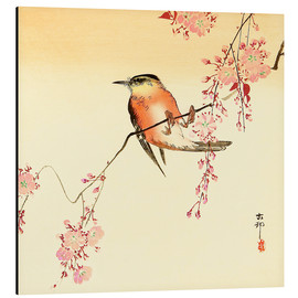 Aluminium print  Red bird and cherry blossom - Ohara Koson