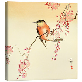 Canvas  Red Bird and Cherry Blossoms - Ohara Koson
