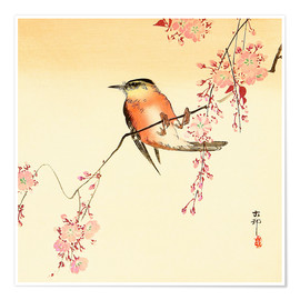 Premium poster Red bird and cherry blossom