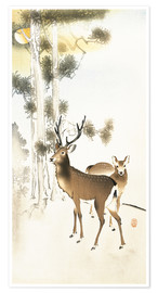 Premium poster Deer and roe deer in winter