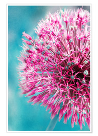 Premium poster Allium in Pink