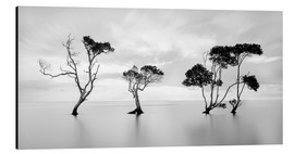 Aluminium print  Tree silhouettes winding over a lake - Steven Fudge