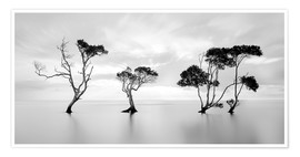 Premium poster Tree silhouettes winding over a lake