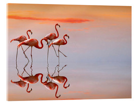 Acrylic print  Flamingos in the mirror - Anna Cseresnjes
