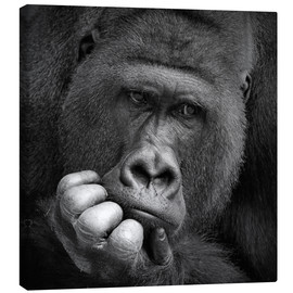 Canvas print  Thoughtful Gorilla - Antje Wenner-Braun