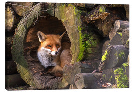 Canvas print  Fox in a hollow trunk - Cees Ginkel
