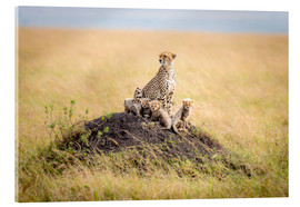 Acrylic print  Leopard mother - Ted Taylor