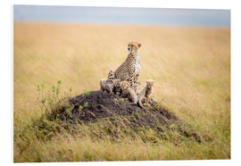 Foam board print  Leopard mother - Ted Taylor