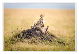 Premium poster  Leopard mother - Ted Taylor
