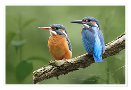 Premium poster Kingfisher Germany