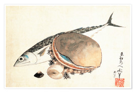 Premium poster Mackerel and sea shells