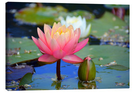 Canvas print  water lily - GUGIGEI