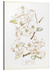 Aluminium print  Apple blossom - Charles Rennie Mackintosh