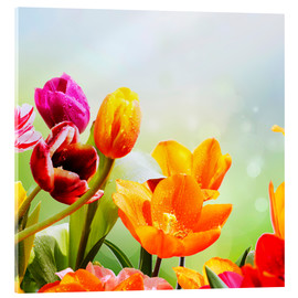 Acrylic print  Tulips with Water Drops - Lichtspielart