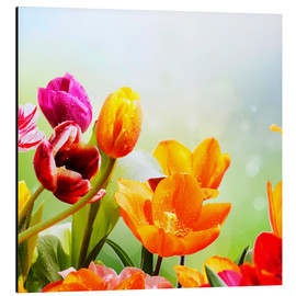 Aluminium print  Tulips with Water Drops - Lichtspielart