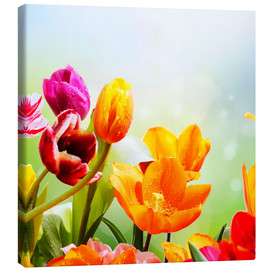 Canvas  Tulips with Water Drops - Lichtspielart