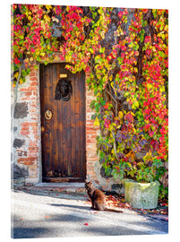Acrylic print  Cat in front of an ivy-lined door - Julie Eggers