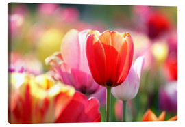 Canvas print  Beautiful colorful Tulips - Lichtspielart