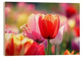 Wood print  Beautiful colorful Tulips - Lichtspielart