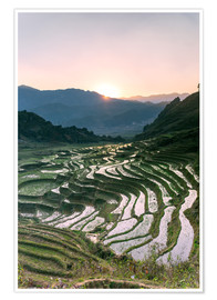Premium poster  Landscape: sunrise over rice paddies in Sa Pa, Vietnam - Matteo Colombo
