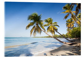 Acrylic print  Les Salines tropical beach, Martinique, Caribbean - Matteo Colombo