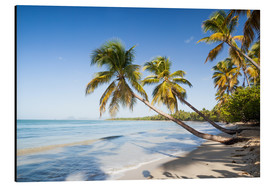 Alu-Dibond  Famous Les Salines tropical beach with palm trees, Martinique, Caribbean - Matteo Colombo