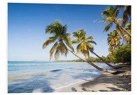 Foam board print  Famous Les Salines tropical beach with palm trees, Martinique, Caribbean - Matteo Colombo