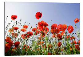 Aluminium print  Poppies low Angle View - Lichtspielart