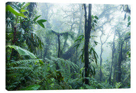 Canvas  Rainforest in Costa Rica - Matteo Colombo