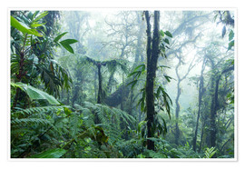 Premium poster  Rainforest in Costa Rica - Matteo Colombo