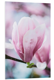 Foam board print  Closeup of blossoming magnolia in spring - Peter Wey