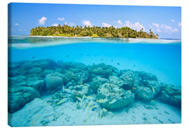 Canvas print  Reef and tropical island, Maldives - Matteo Colombo
