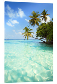 Acrylic print  Turquoise sea and palm trees, Maldives - Matteo Colombo