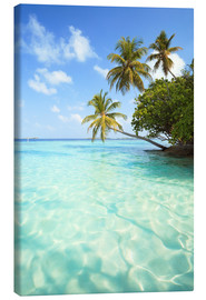 Canvas  Turquoise sea and palm trees, Maldives - Matteo Colombo