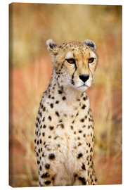 Joe Restuccia III - Namibia, Africa: Sitting Cheetah (Acinonyx Jubatus) at Africa Project, Okonjima